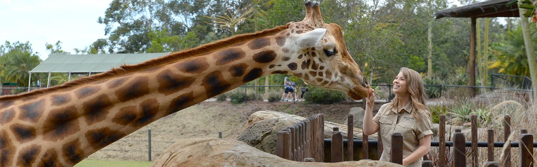 Bindi feeding a Giraffe.