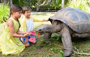 Two kids feeding a tortoise flowers.