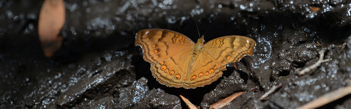 Butterfly in a rock crevice.