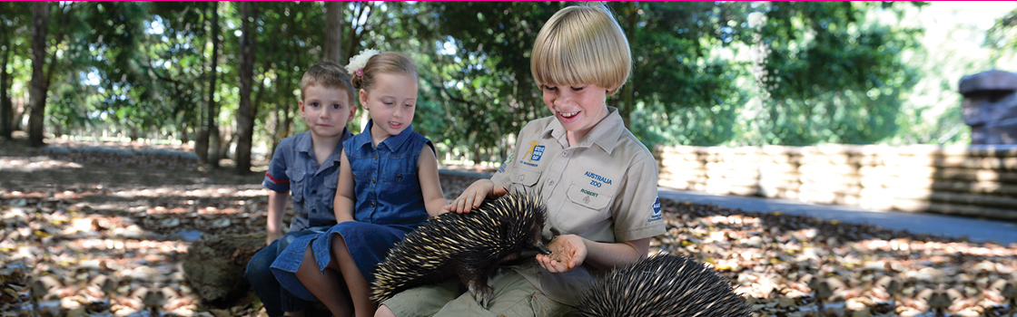 Robert Irwin and kid visitors playing with an Echidna.