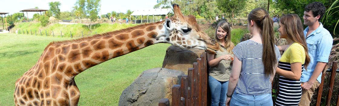 Bindi Irwin and a Giraffe with a Tertiary program.