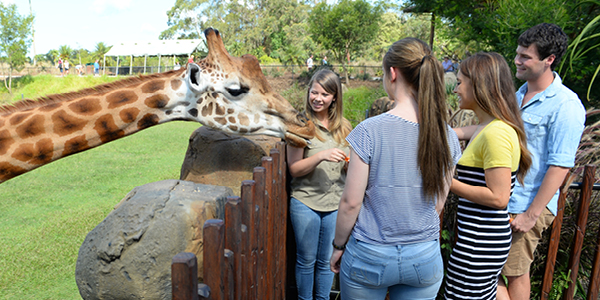 Bindi Irwin and a Giraffe with a Tertiary program.