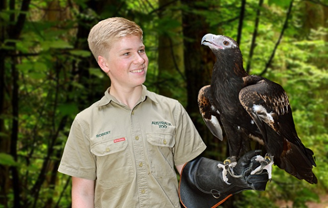 Robert Irwin with Ace the Wedge-tailed Eagle on his arm.