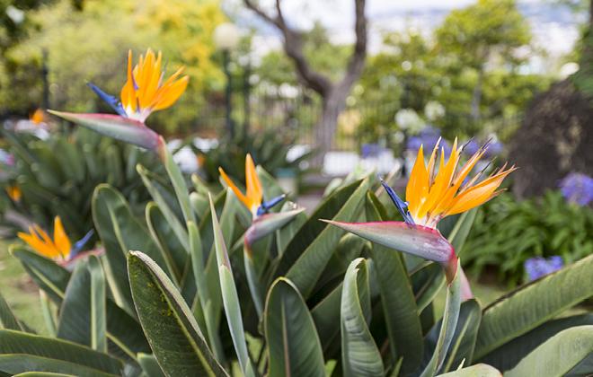 Birds of Paradise Flora