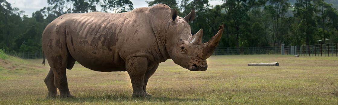 Adopt an Animal DJ Rhino