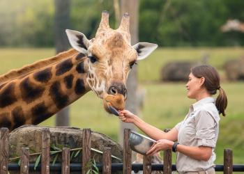 Forest Adopt an Animal Giraffe