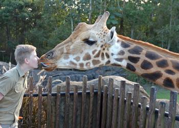 Robert Irwin giving Forest the Giraffe a kiss.