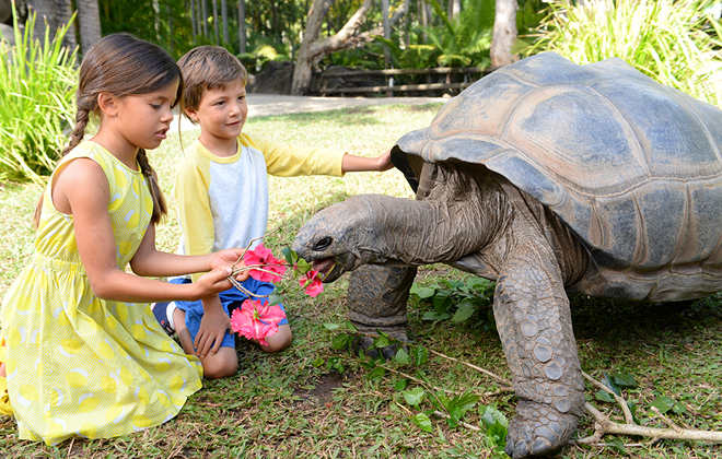 Tortoise snapshots