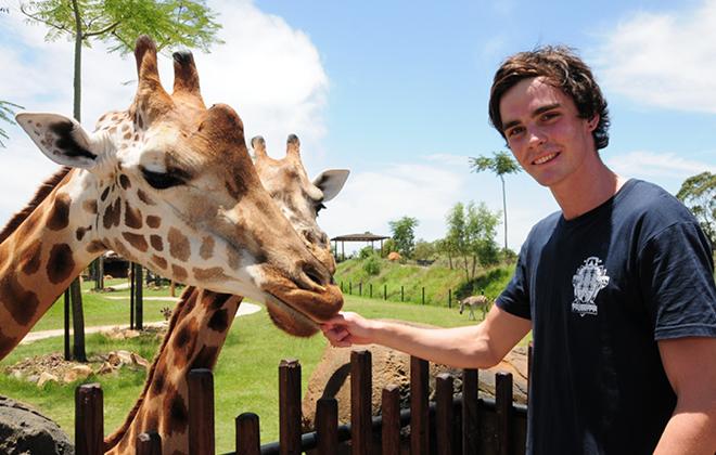 Visitor feeding a Giraffe.