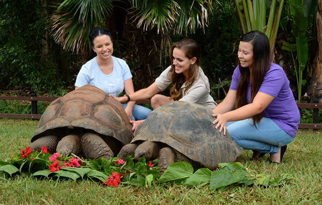 Visitors with two tortoises.