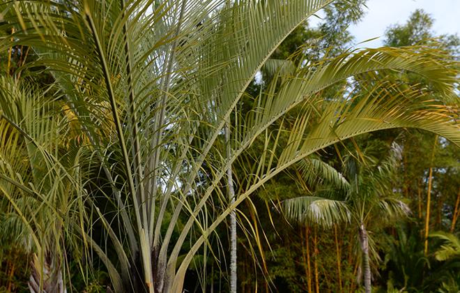 Triangle Palm Flora