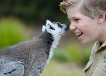 Robert Irwin touching noses with Vatobe the Ring Tailed Lemur.