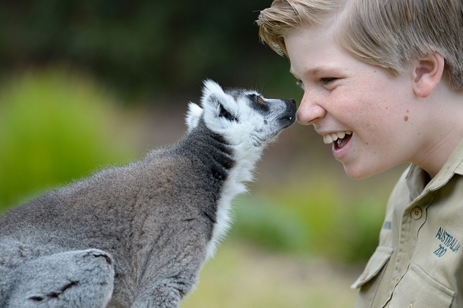 Robert Irwin touching noses with Vatobe the Ring Tailed Lemur.