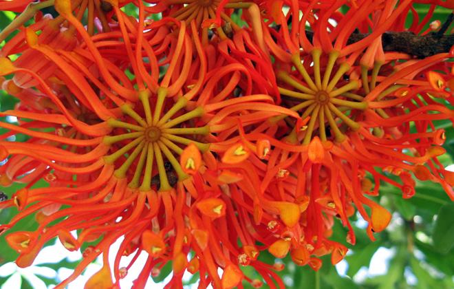 Wheel of Fire Flora