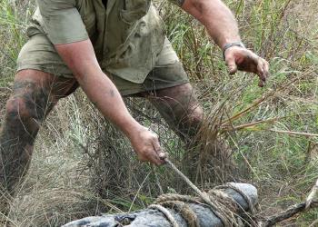 Steve Irwin wrangling a croc.