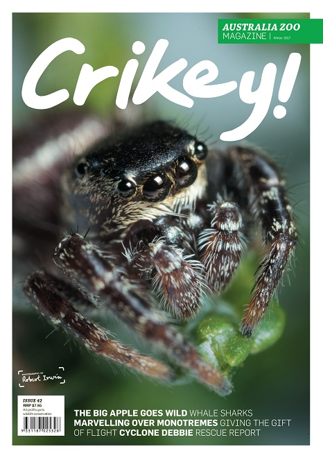 Crikey Magazine Issue 42