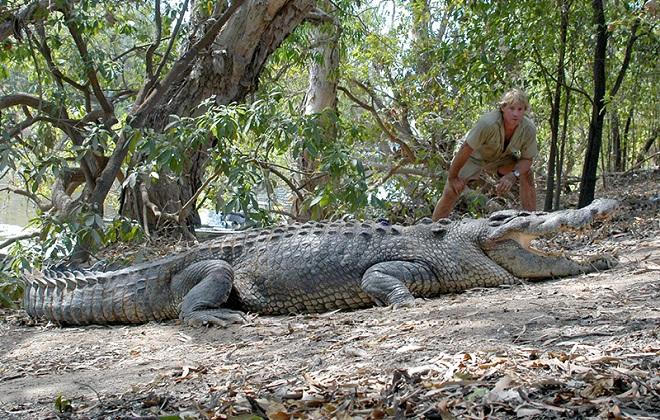 Crocodile Egg Harvesting Petition