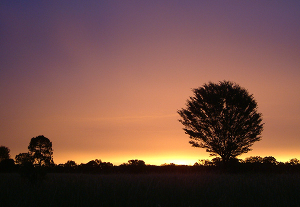 Sunset with trees in front.