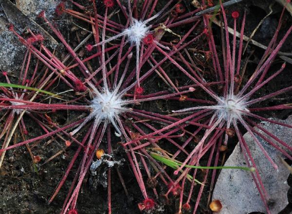 Spiky flower.
