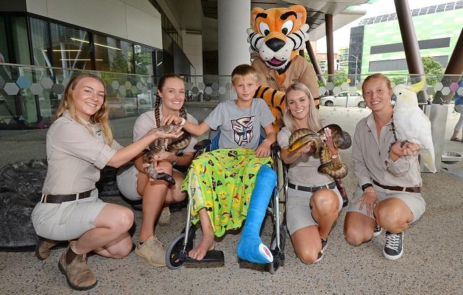 Australia Zoo at Qld Children's Hospital
