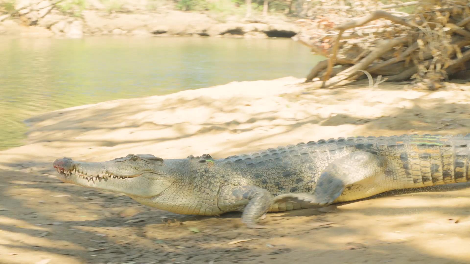 Croc Trip Video