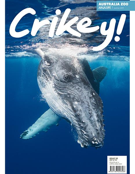 Crikey Magazine Issue 52