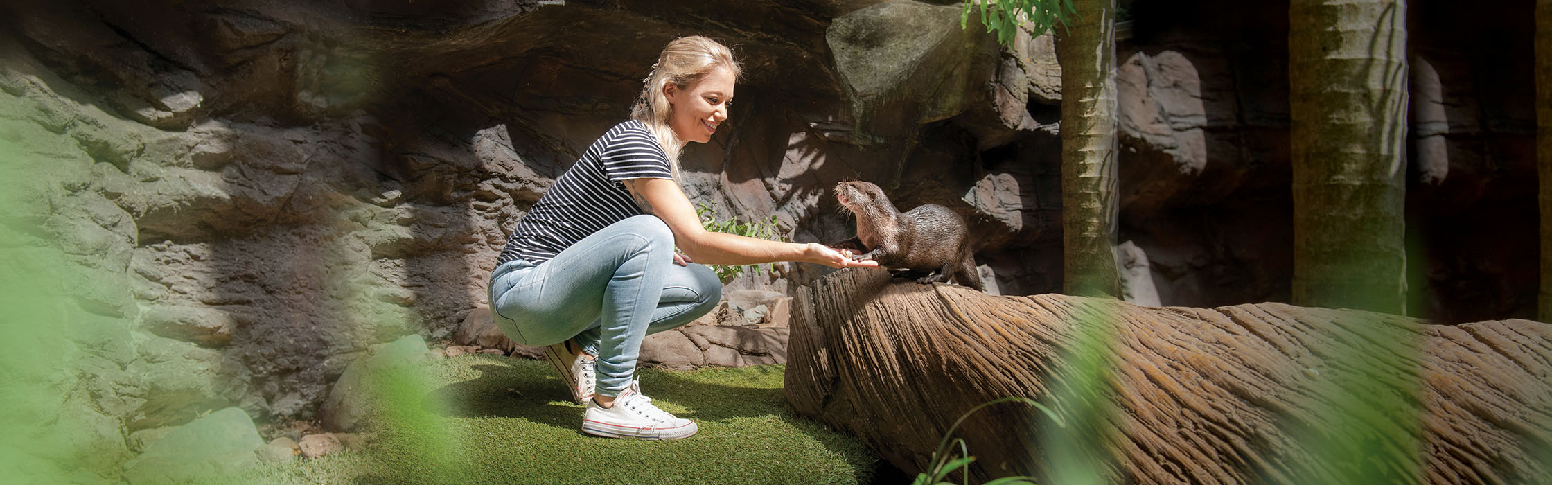 Experiences-Animal Encounters-Otter2240x700