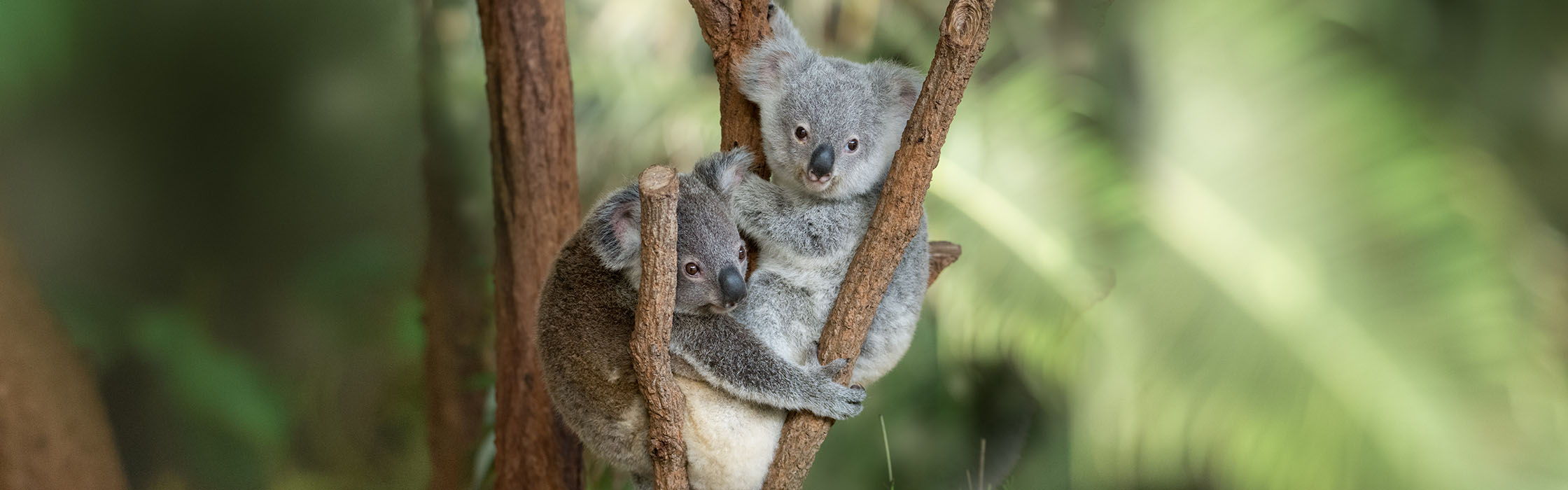 Support Wildlife - Adopt an Animal2240x700