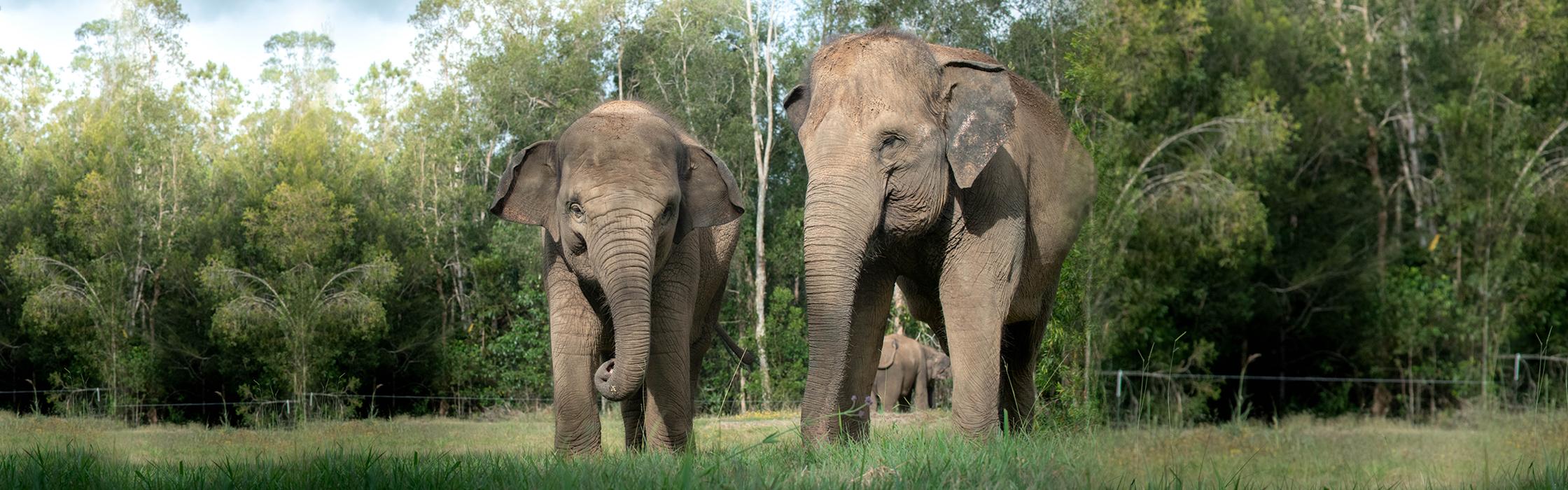 5833_WEBSITE_BANNER_ELEPHANTS2