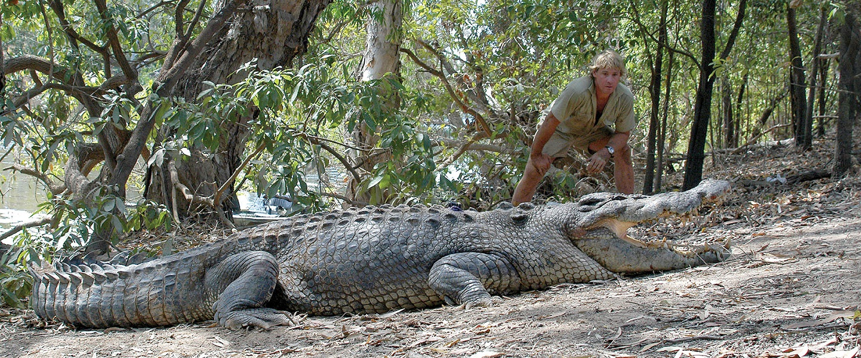 Steve Irwin Crocodile Eggs Petition
