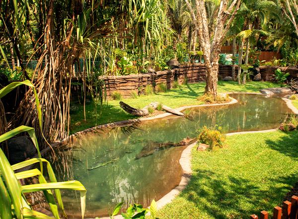 croc walk habitat