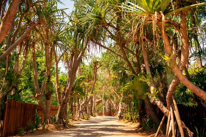 walkway in croc park