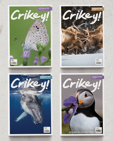 Crikey Mag Covers