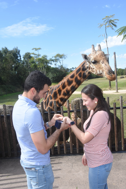 Giraffe proposal