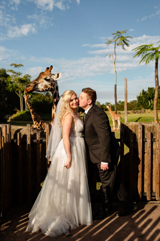 Wedding Giraffe