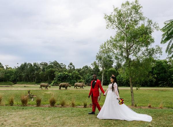 Wedding Rhino